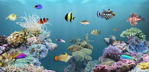 دانلود والپیر زنده اکواریوم aniPet Aquarium Live Wallpaper برای اندروید