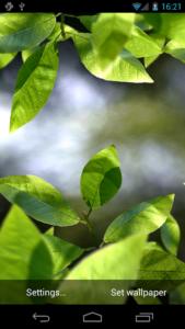 تصویر محیط Fresh Leaves v1.9.5