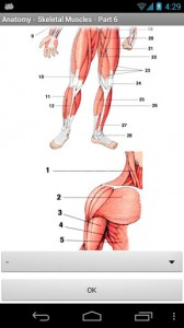 Anatomy - Skeletal Muscles4