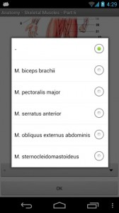 Anatomy - Skeletal Muscles5