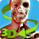 Easy Anatomy 3D (Learn Anatomy)789
