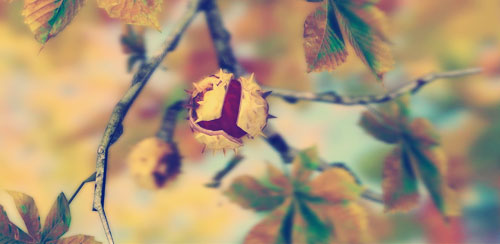 Autumn-Leaves-in-HD-Gyro-3D-XL