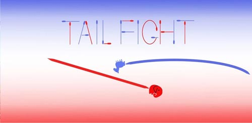 Tail-Fight