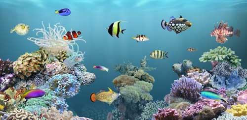 Aquarium 3D Live Wallpaper Premium v1.7.0