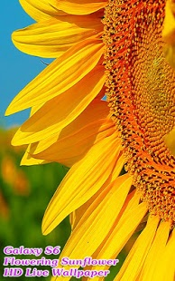 Incredible Flowering Sunflower v1.3.8