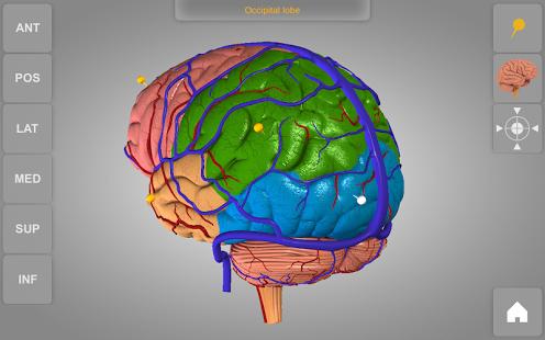 Brain 3D Anatomy v1.0.2