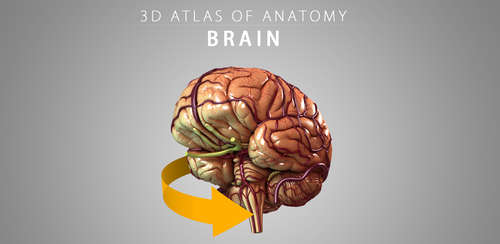 Brain 3D Anatomy v1.0.2