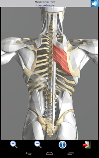 Visual Muscles 3D v1.4