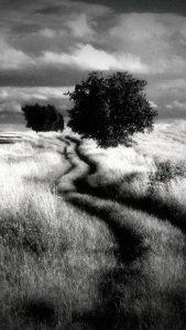 تصویر محیط Dramatic Black & White v2.50