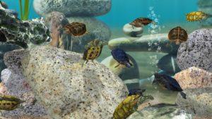 تصویر محیط Fish Farm 3 – 3D Aquarium Simulator v1.15.7180